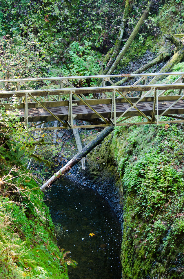 Foot bridge over Oneonta Gorge
