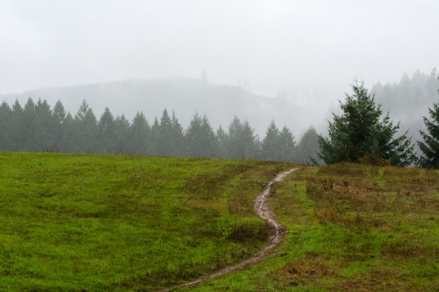 The wet, muddy trail passing through one of several large meadows