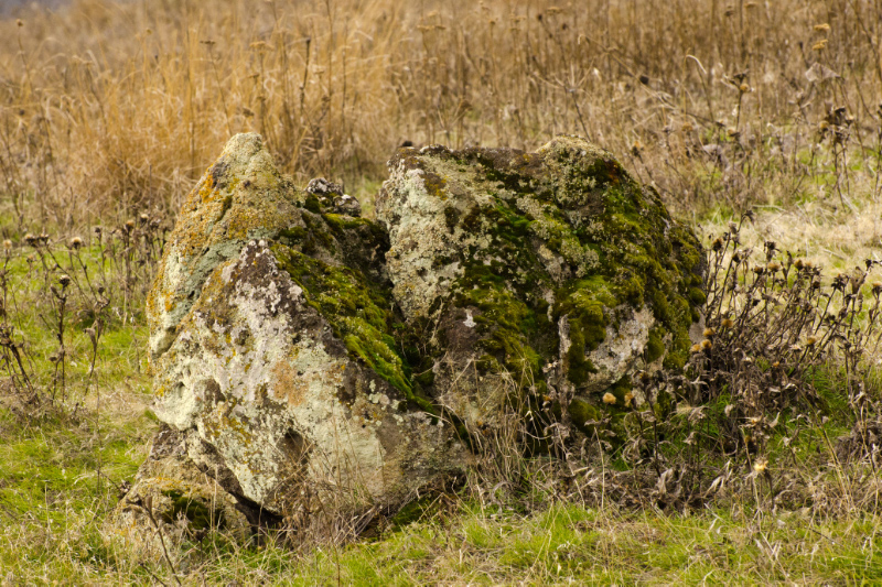 Moss and Lichen on a large rock likely a result of the Missoula Floods