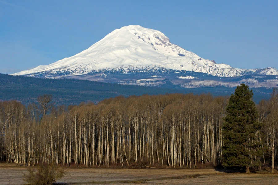 Mt. Adams with a new coat of snow (the autumn golden leaves of the Aspen have fallen)
