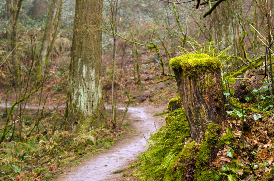 The muddy Marquam Trail