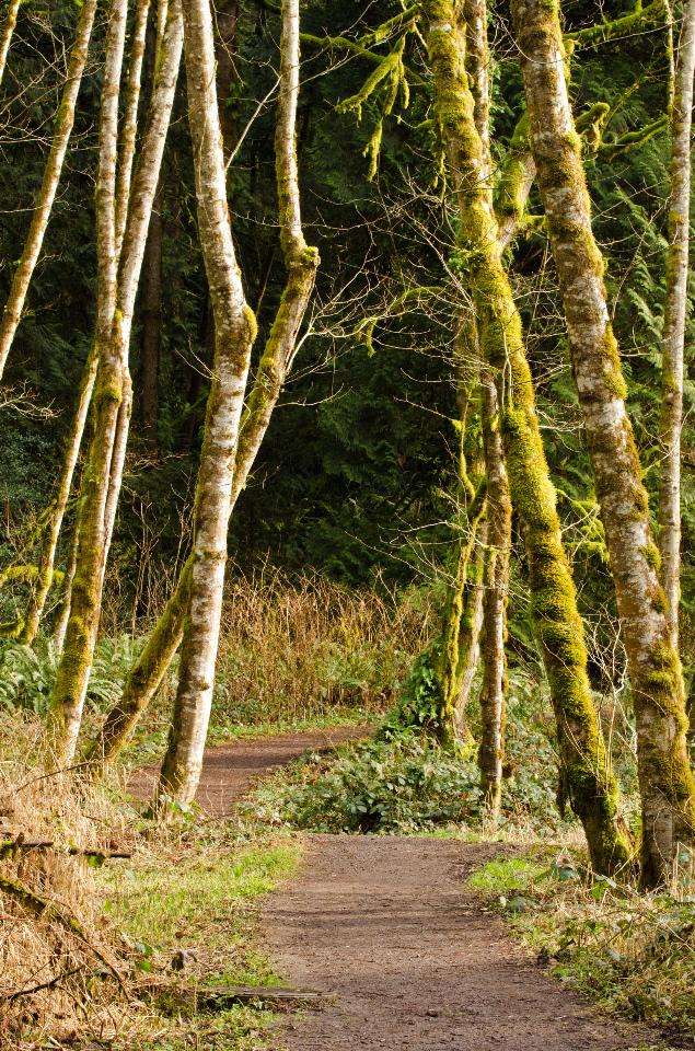 The pleasant trail