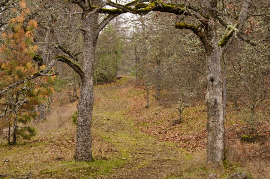 Trail leading through the White Oaks
