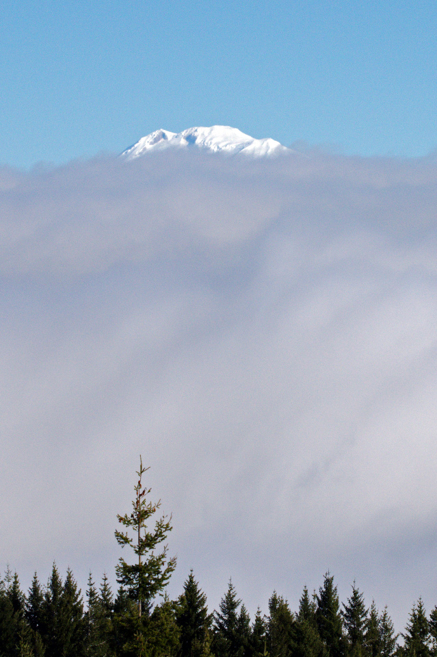 Mt. Adams peeking above the clouds