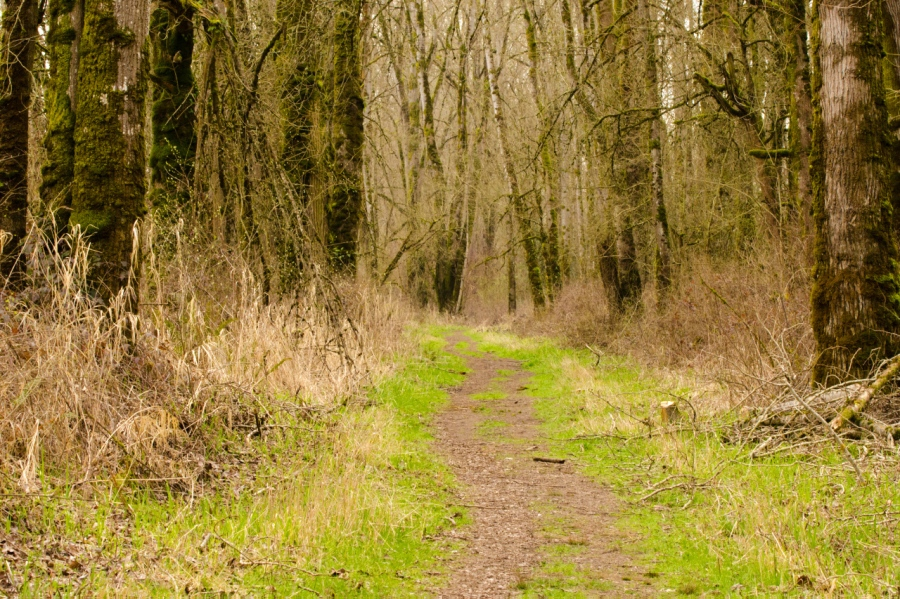 The trail leading through the woods