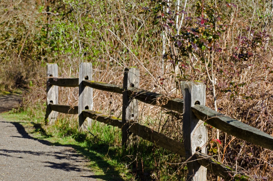 Wooden fence along the trail