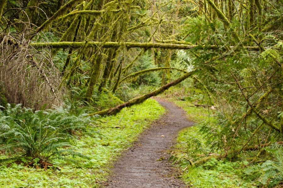 The trail following an old logging road