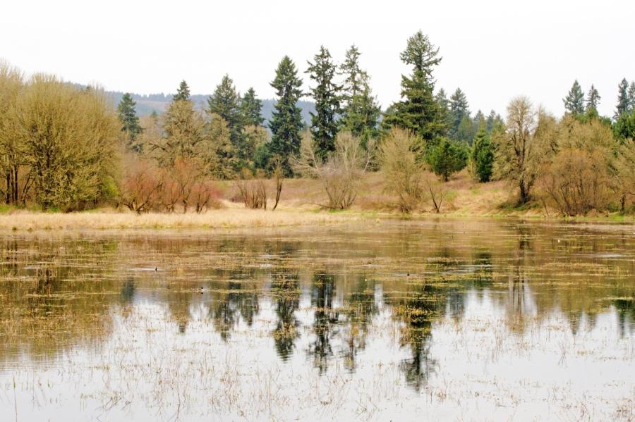 Virginia Lake