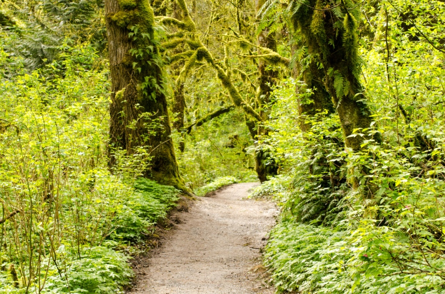 The pleasant Trail through the rain forest environment