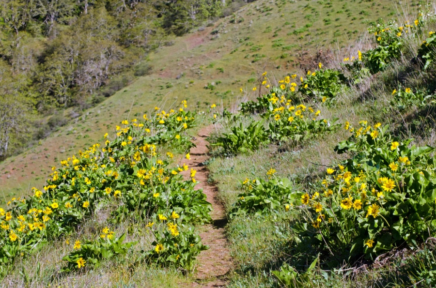 Trail leading down the hill