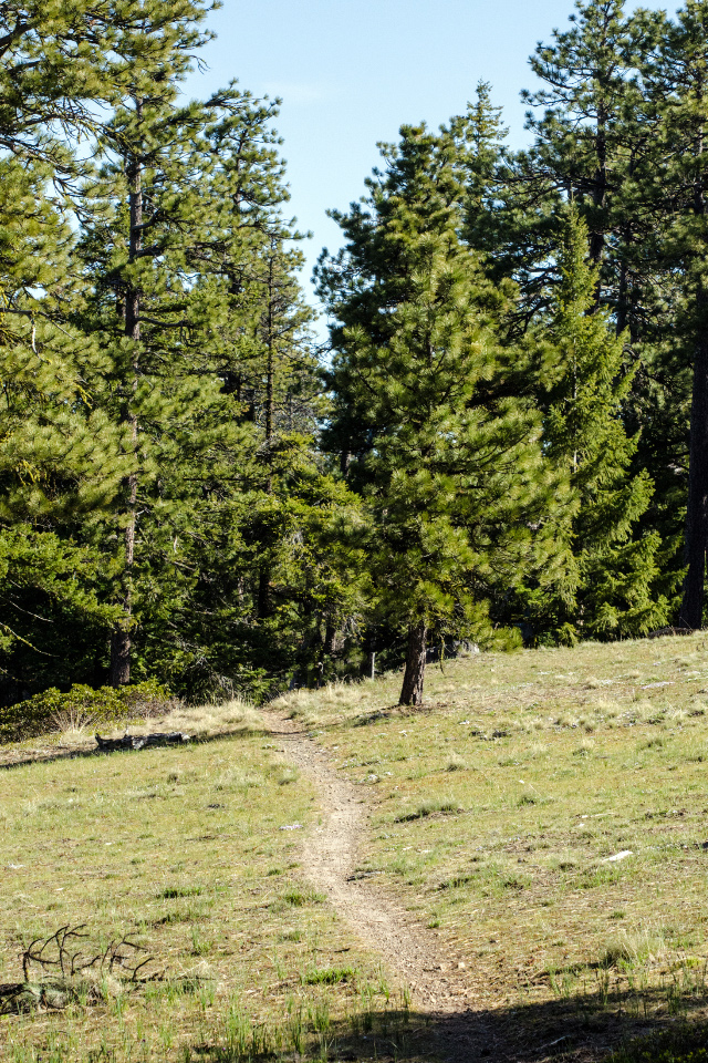 Trail leading into the Ponderosa Pines