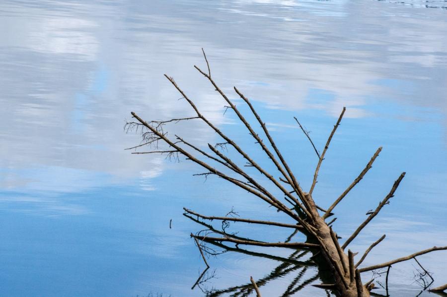 Fallen log in Hagg Lake