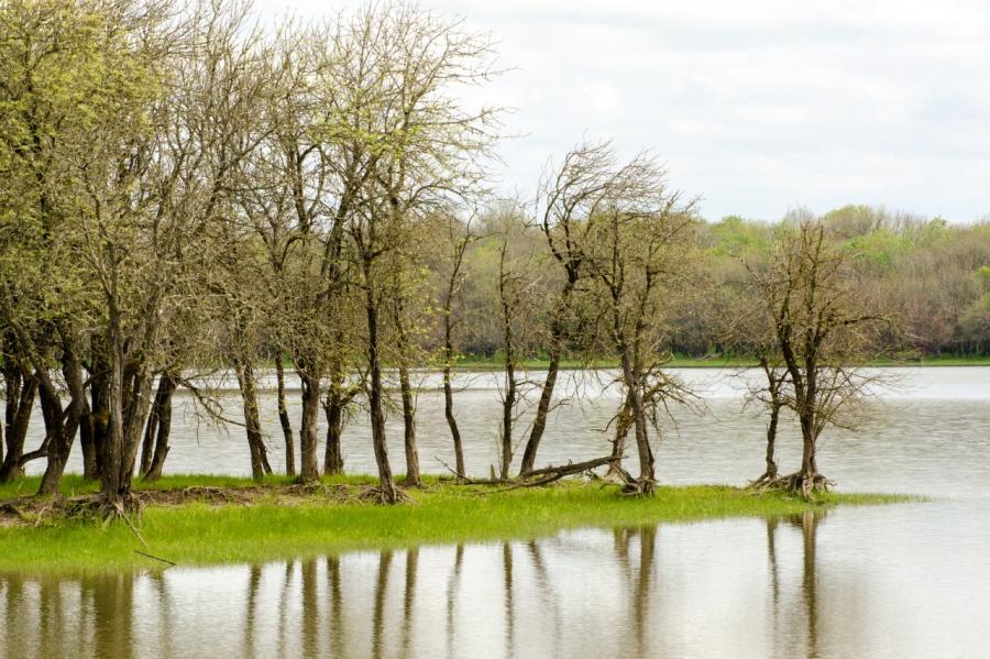 Oak trees on a spit into Sturgeon Lake