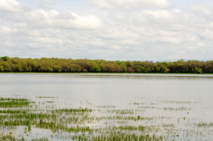 Sturgeon Lake