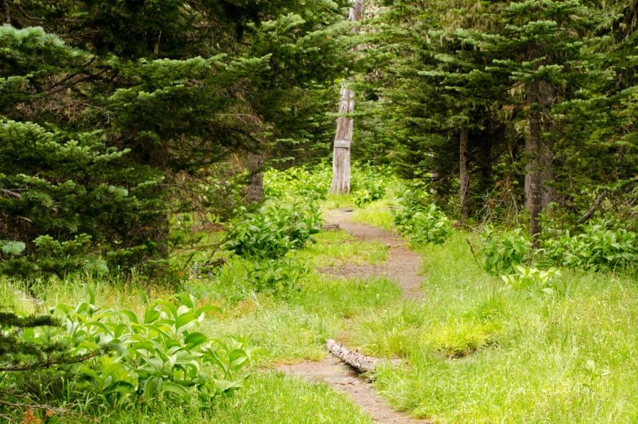 Plush meadows near Butte Camp