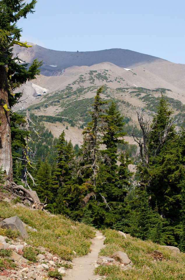Timberline Trail high on Gnarl Ridge with Cooper Spur in the background