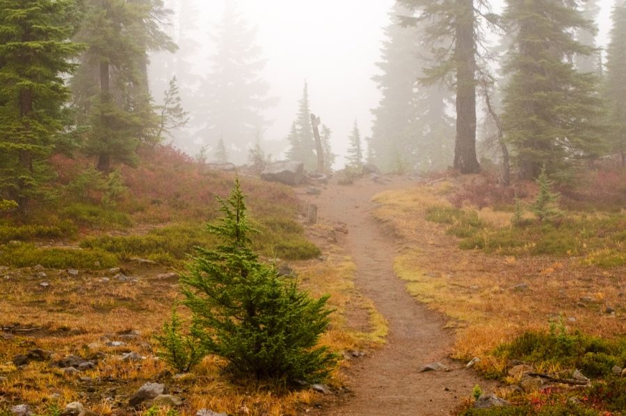 A foggy Pacific Crest Trail section heading through Jefferson Park