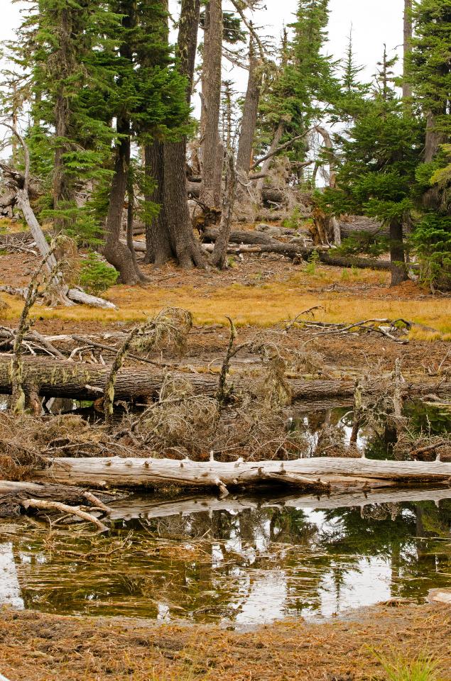 One of the Washington Ponds