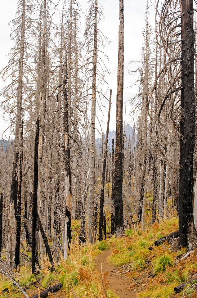 PCT heading through a recent wildfire area
