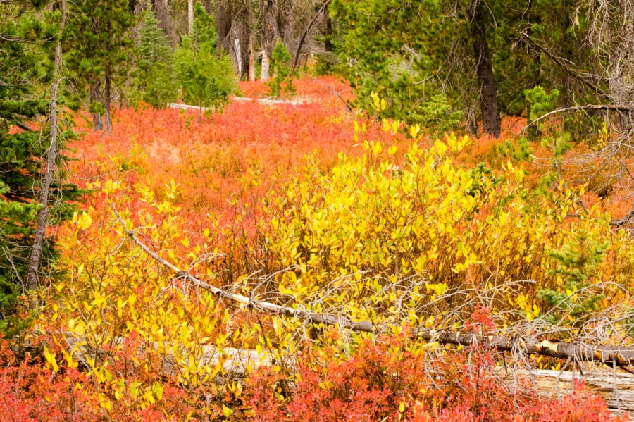 Colorful meadow near the trailhead