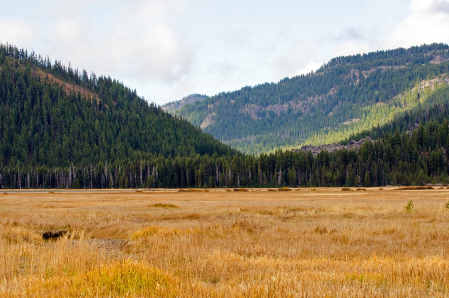 One of many large meadows along the highway