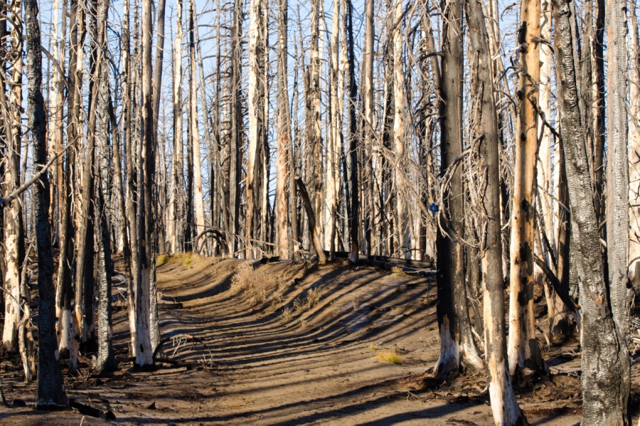The early portion of the trail passes through the 2012 Pole Creek wildfire area