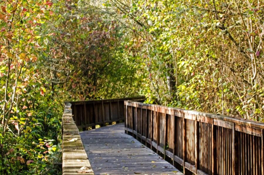An  Urban Nature Park on a Pleasant AutumnDay