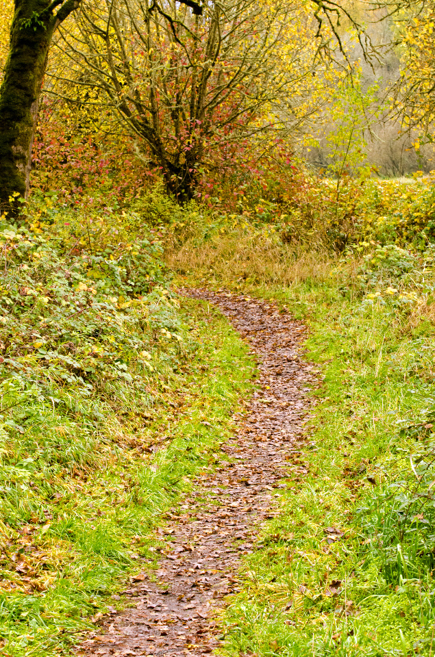 Pleasant stretch of trail