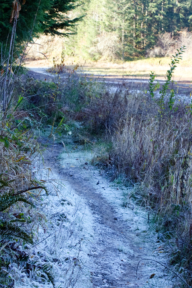 Frosty trail