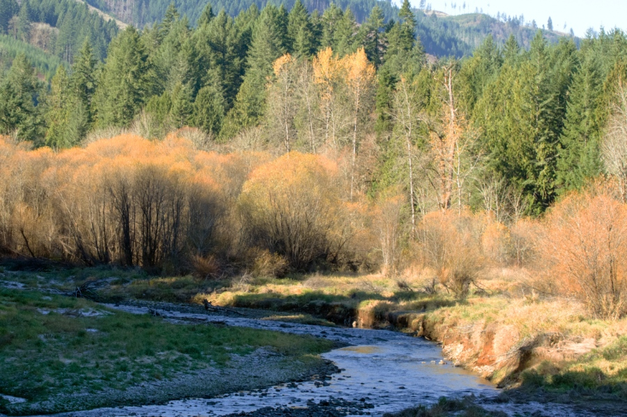 Scoggins Creek