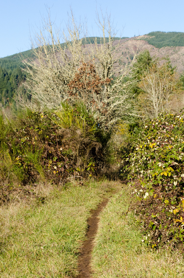 Pleasant stretch of trail