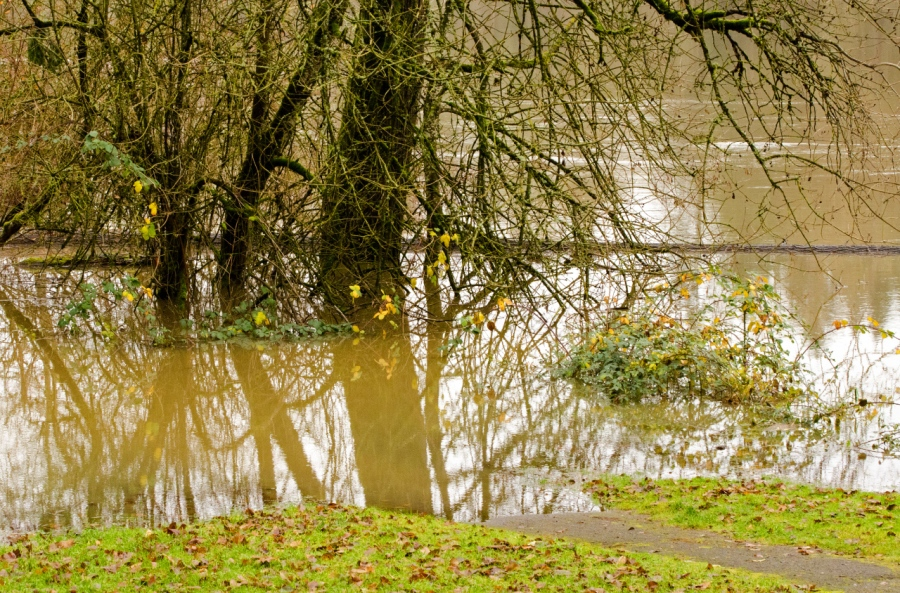 The trail disappears in the high waters of the Willamette River