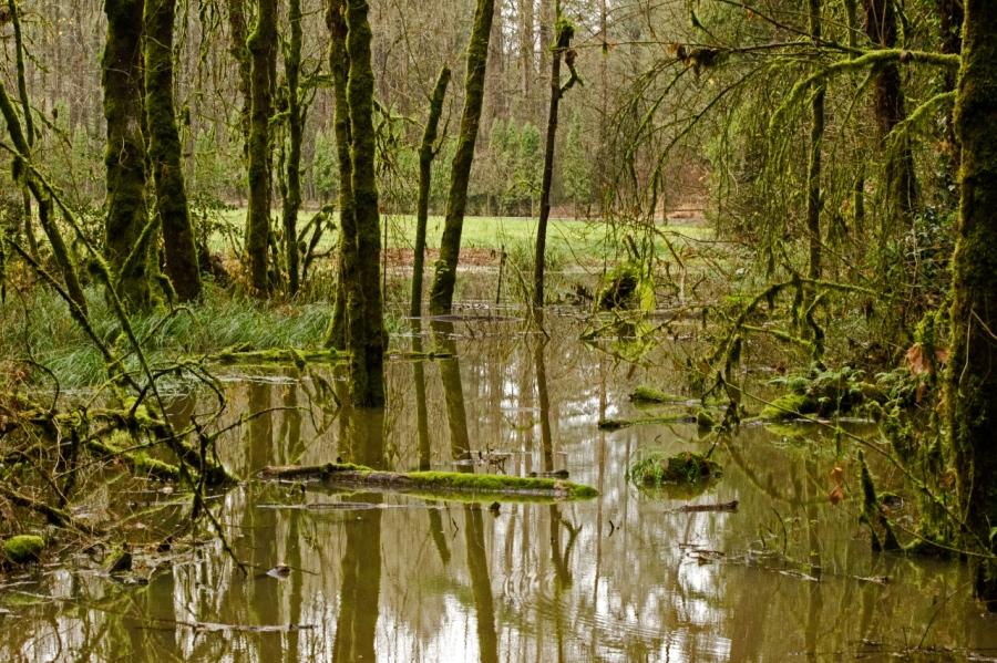 Flooded area near the trail