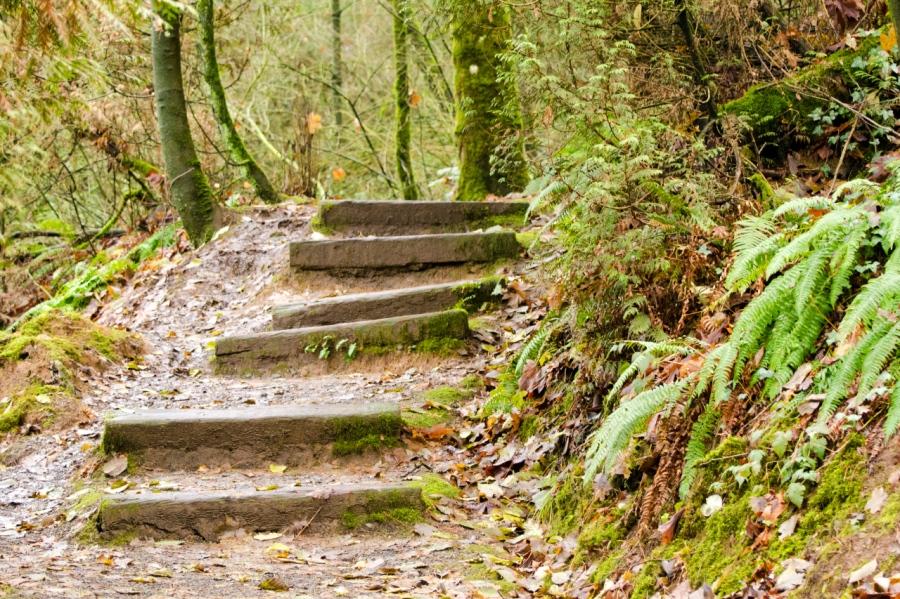 Steep stretch of the Markham Trail