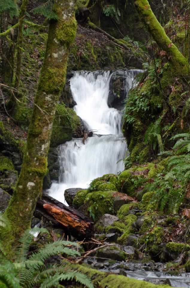 Small waterfall on Gorton Creek