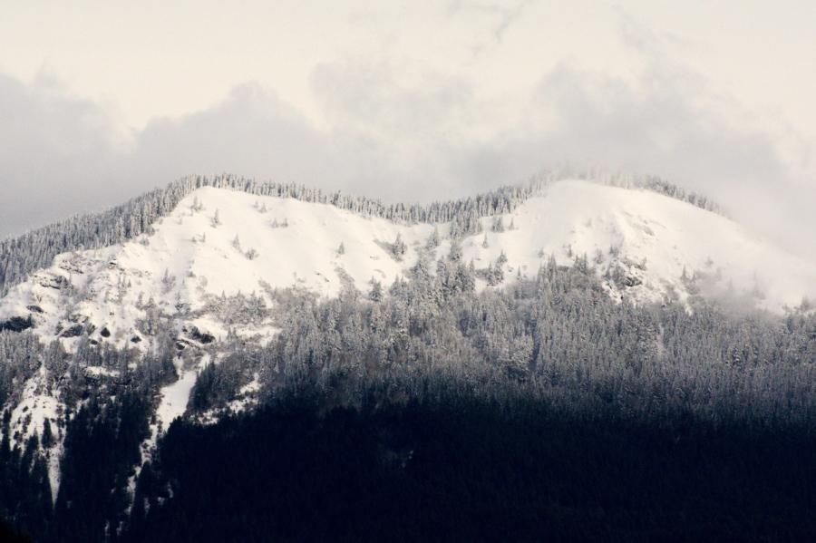 Fresh snow on Dog Mountain