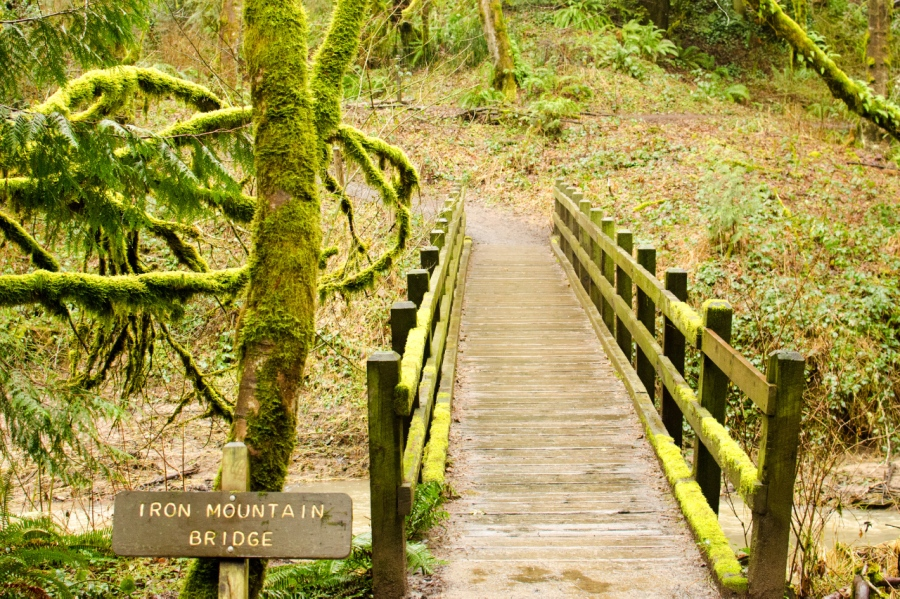 Foot Bridge on the Trail