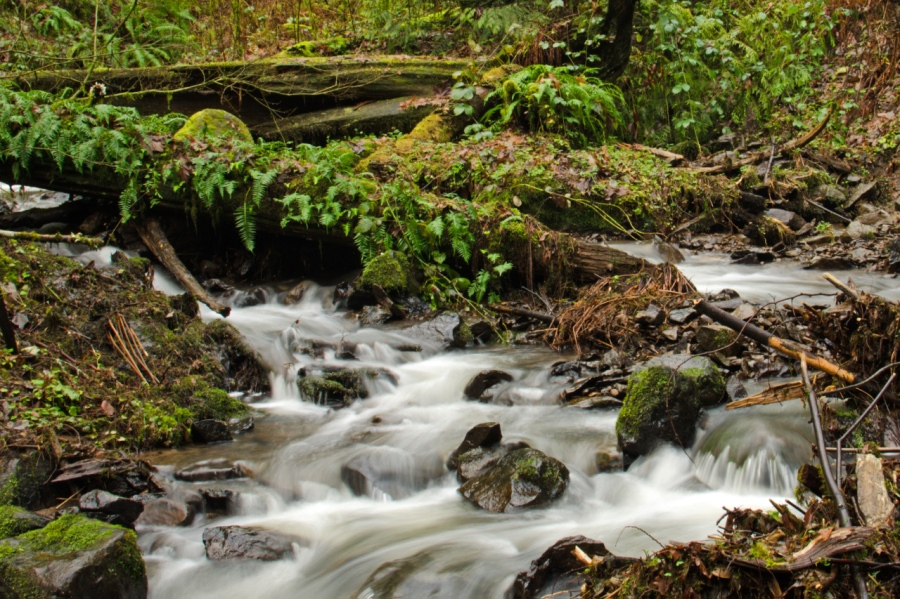 Bunk Creek