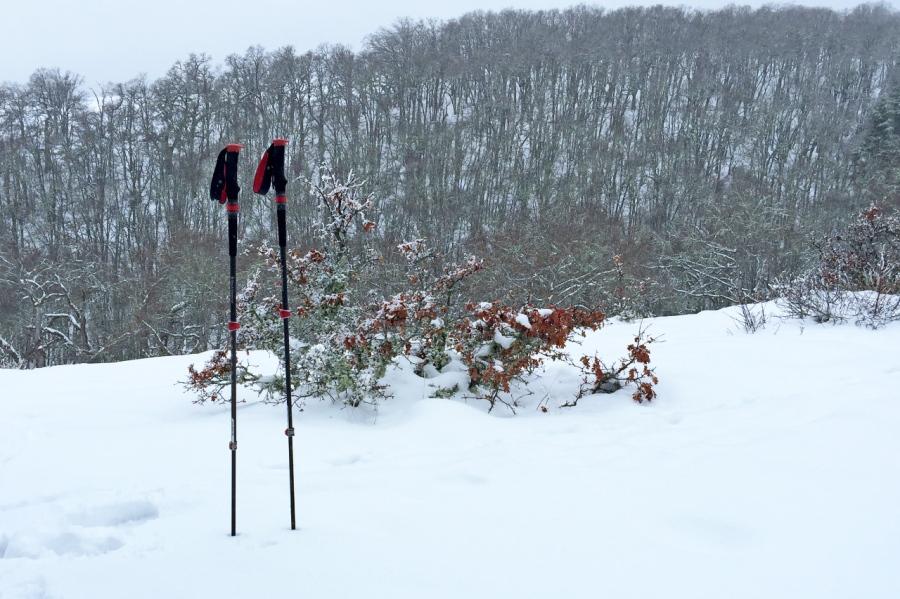 Deer Tracks in Fresh FallenSnow