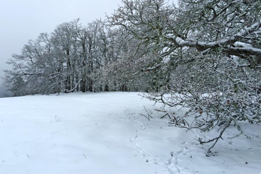 Blacktail Deer had been feeding alongside the Oak trees