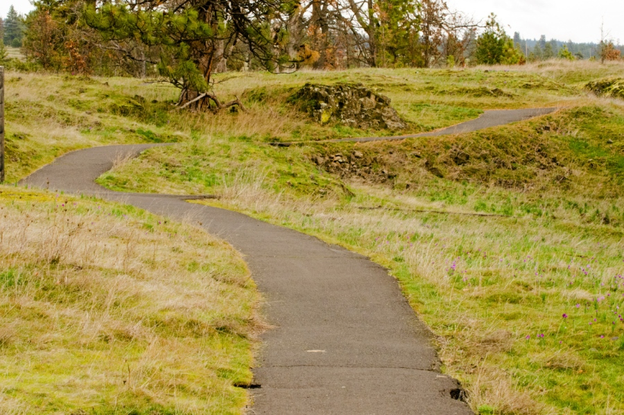 Paved trail in Lower Catherine Creek area (the multiple spots of purple are Grass Widows)
