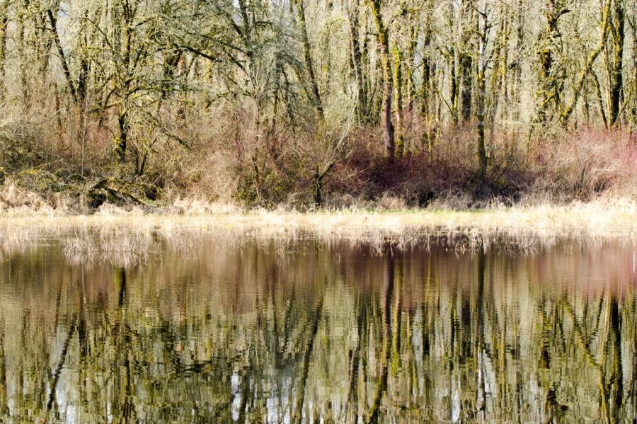 Reflections in Virginia Lake