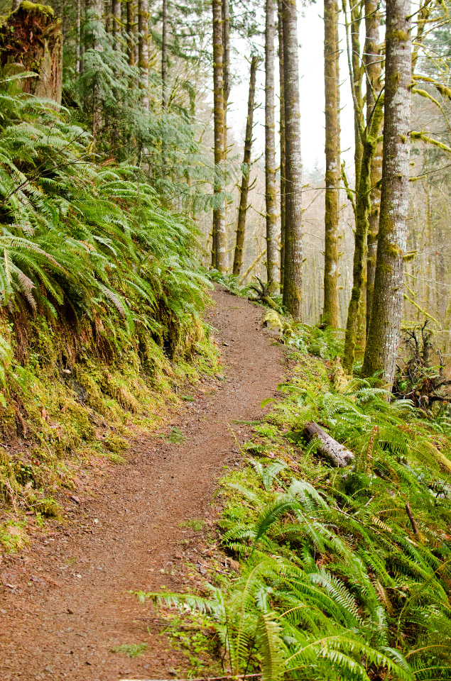 Pleasant stretch of the lower trail