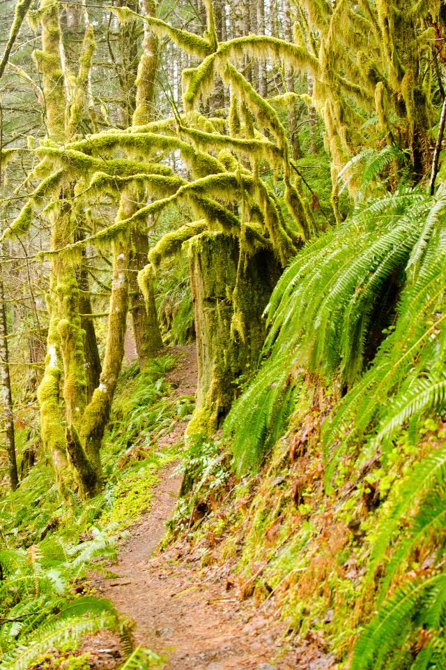 Classic Rain Forest scene along the trail