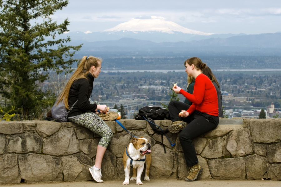 Dog oblivious to the views at Council Crest