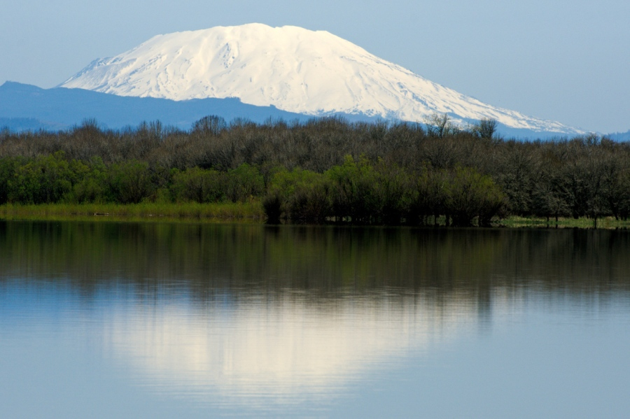 Mt. St. Helens reflected in Sturgeon Lake