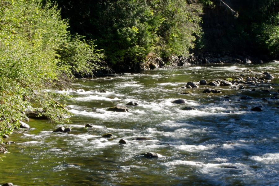 Salmon River near trailhead