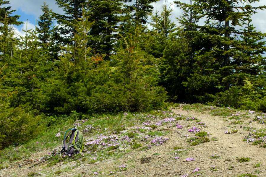My daypack in a field of Phlox at the summit area of Huckleberry Mountain
