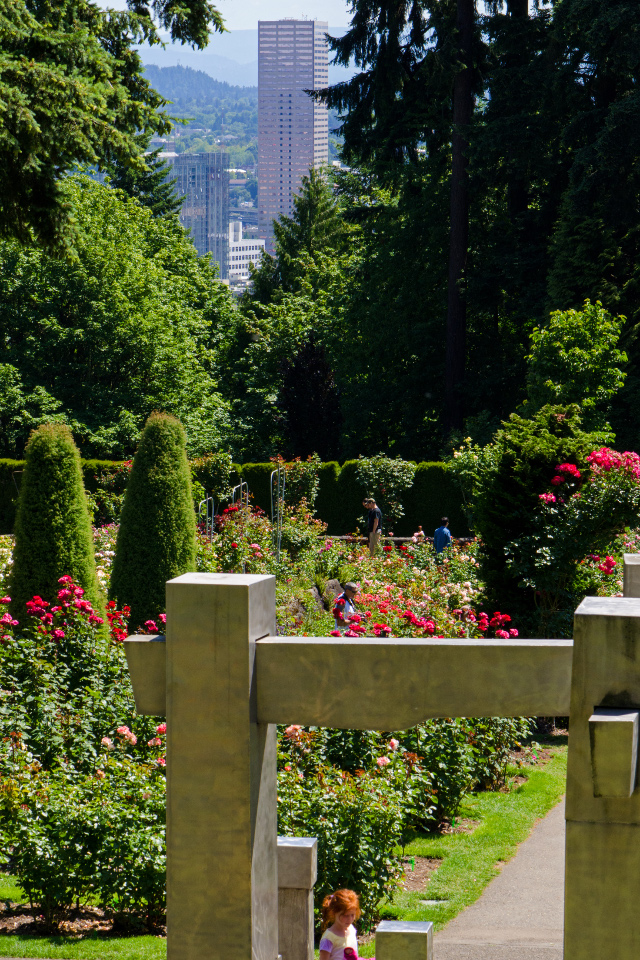 Downtown Portland from the Rose Garden