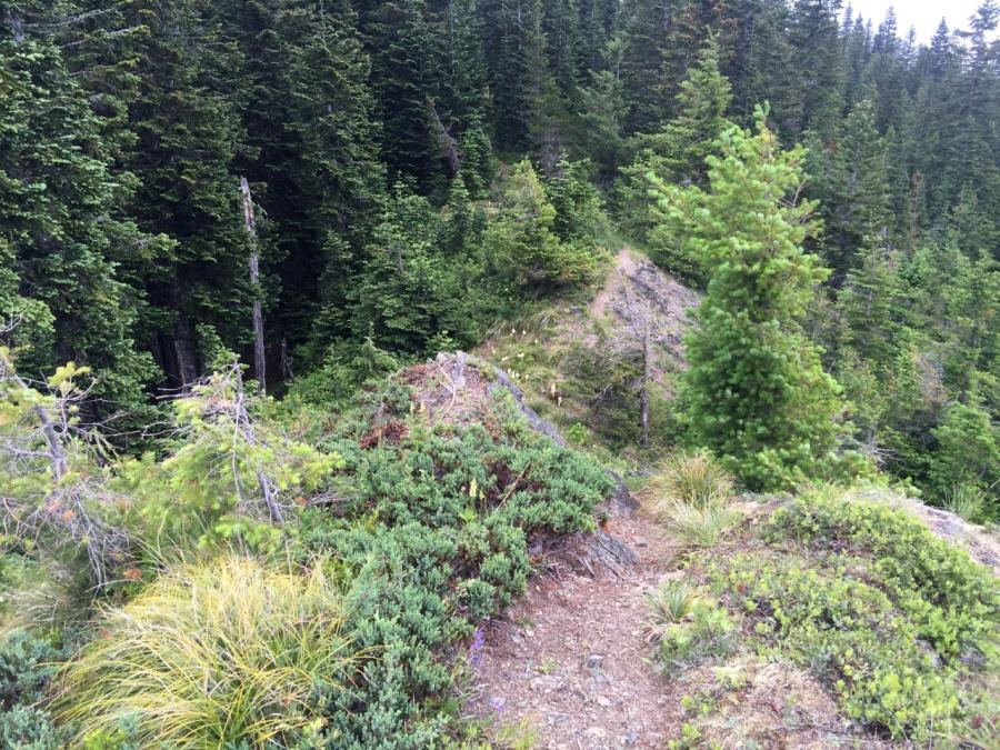 Trail descending Sister Rocks
